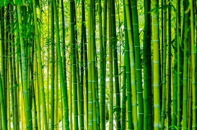 Бамбук - Коллекционная плитка - Керамическая плитка ...